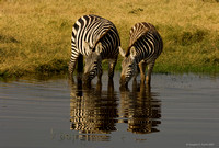 """A Blurred Drink of Water"" - Africa 2007"