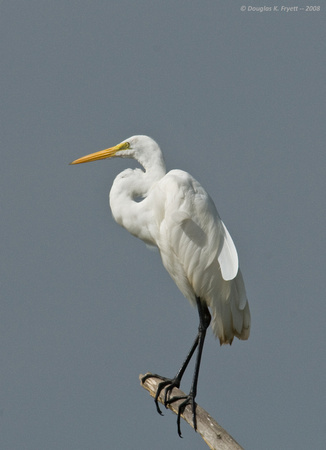 """The View Is Great!"" - White Egret"